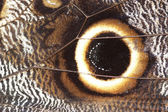 аннотация - деталь крылья бабочки — Стоковое фото