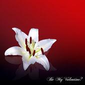 Tarjeta de San Valentín de lirio blanco — Foto de Stock