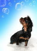 Bathtime fun — Stock Photo