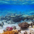 Stock Photo: Coral Reef