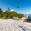 Beach of the Caribbean Sea in Mexico — Stock Photo