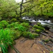 Stock Photo: Irish creek of Clare Glens