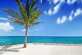 Idyllic scenery of Caribbean sea — Stock Photo