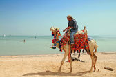 Egyptian man on his camel — Stock Photo
