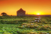 Ruins of old Irish chapel in Burren — Stock Photo