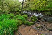 Irish creek of Clare Glens — Stock Photo