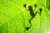 Frog shadow on the leaf — Stockfoto