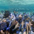 Shoal of blue fishes — Stock Photo #8430865