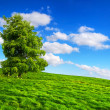 Stock Photo: Green nature scenery