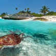 Caribbean Sea scenery with green turtle - Stock Photo