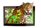3D TV with wildlife jaguar — Stock Photo