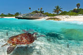 Caribbean Sea scenery with green turtle — Stock Photo