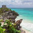 Iguanon cliff of Tulum — Stock Photo #9382668