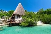 Idyllische Mexicaanse jungle landschap — Stockfoto