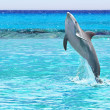 Dolphin jumping of the Caribbean Sea — Stock Photo #9857273