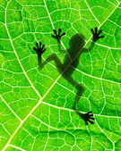 Frog shadow — Stock Photo