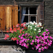 Flower window — Stockfoto