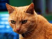 Cat's head — Stock Photo
