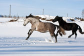 Herd of running horses — Foto Stock