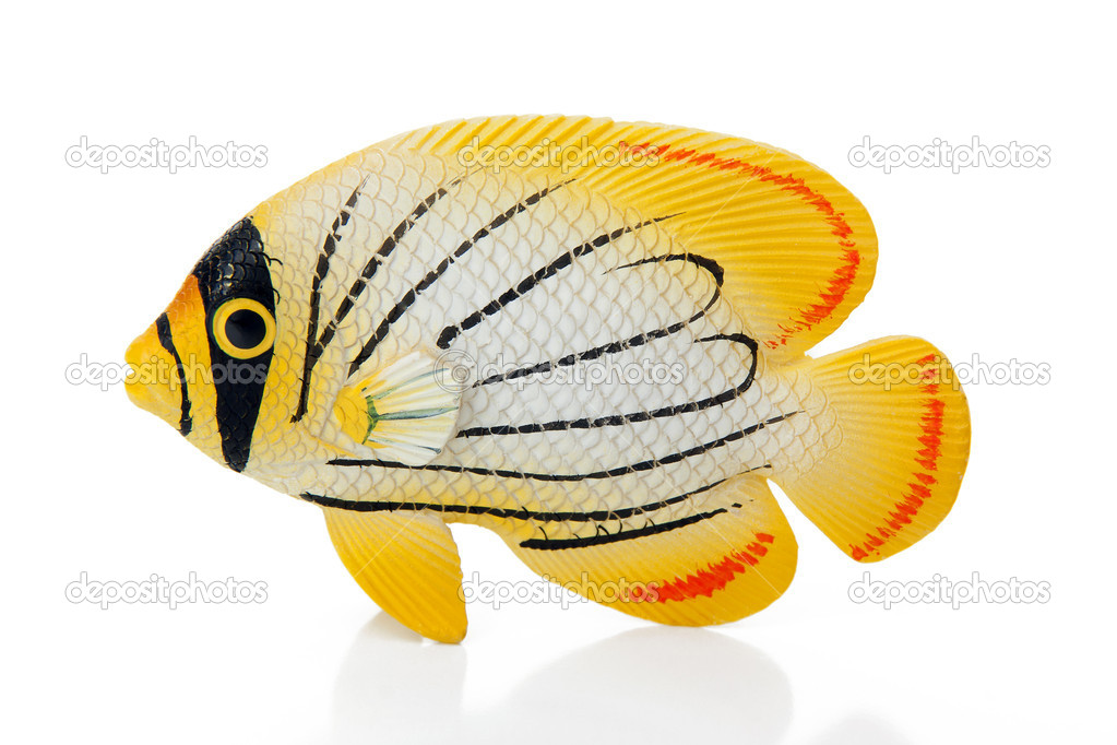 Coral fish on white background  Stock Photo #8886417