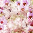 Butterflies and orchids flowers pink background ( 1 of set) — Stock Photo #10188029