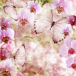 Butterflies and orchids flowers pink background ( 1 of set) — Photo