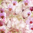 Butterflies and orchids flowers pink background ( 1 of set) — Stockfoto