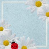 Background with ladybugs — Stock Photo