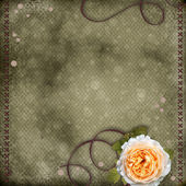 красивый фон с красной розы — Стоковое фото
