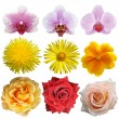 Set of flowers — Stockfoto