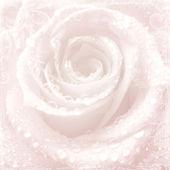 Czułość ślub różowy tło z różą — Zdjęcie stockowe