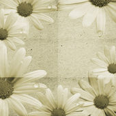 Papírové pozadí s heřmánkem — Stock fotografie