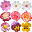 Set of flowers. Isolated on white background. - Stock Photo