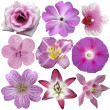 Stock Photo: Collection of pink and purple flowers isolated on white