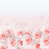 Pink roses background — 图库照片