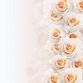 Grädde rosor bakgrund — Stockfoto