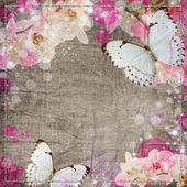 Butterflies and orchids flowers beige background — Stock Photo