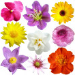 Royalty-Free Stock Photo: Set of flowers in different shapes, color