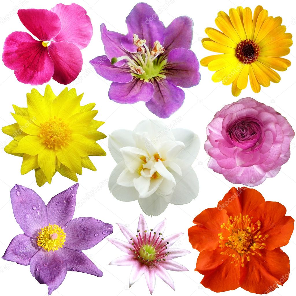 Set of flowers in different shapes color stock photo for What makes flowers different colors