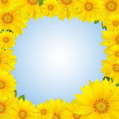 Flowers frame with yellow sunflower isolated on sky background — Stock Photo