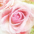 Stock Photo: Beautiful Rose Background