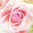 Beautiful Rose Background — Stock Photo #9201606