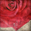 Red rose on the old paper — Stock Photo #9403048