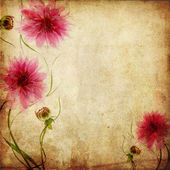 Old paper background with pink flowers — Stock Photo