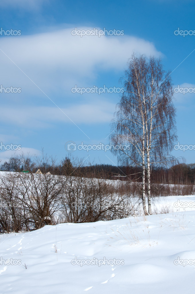 Russian Winter Landscape with birch  Stock Photo #9423922