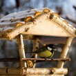 Tit on the feeder - Stock Photo