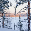 Stock Photo: Winter forest and lake at the sunset