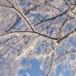 Frozen birch tree branch — Stock Photo