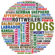 Dog kinds - Stock Photo