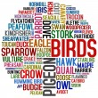 About birds — Stock Photo
